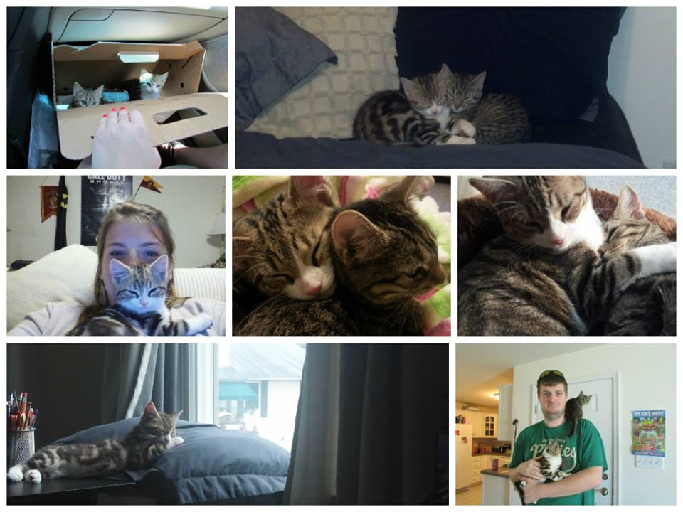 Photo collage of 2 cats, Robert and Cora