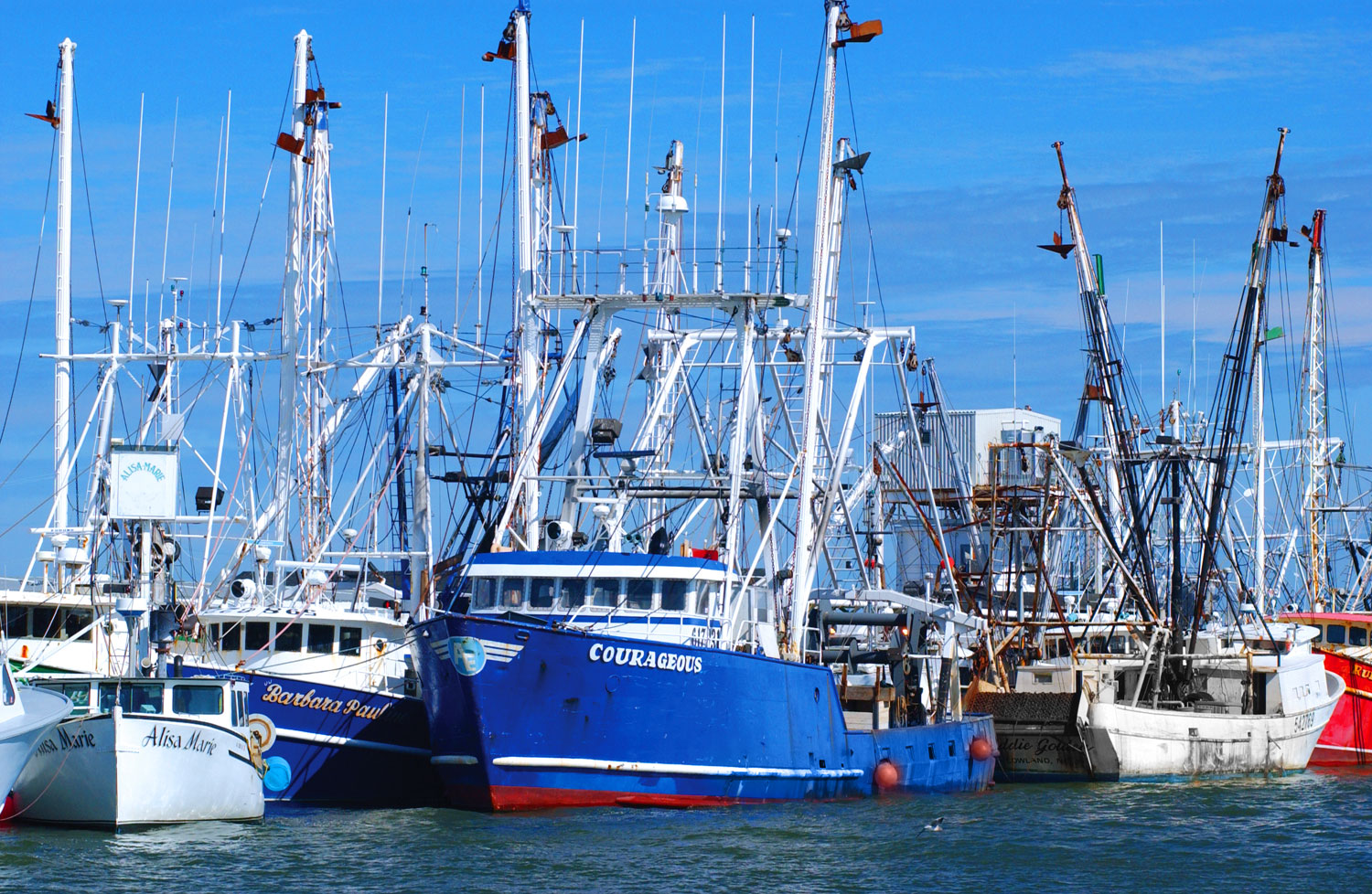 Commercial fishing cape may county nj official website for What is commercial fishing