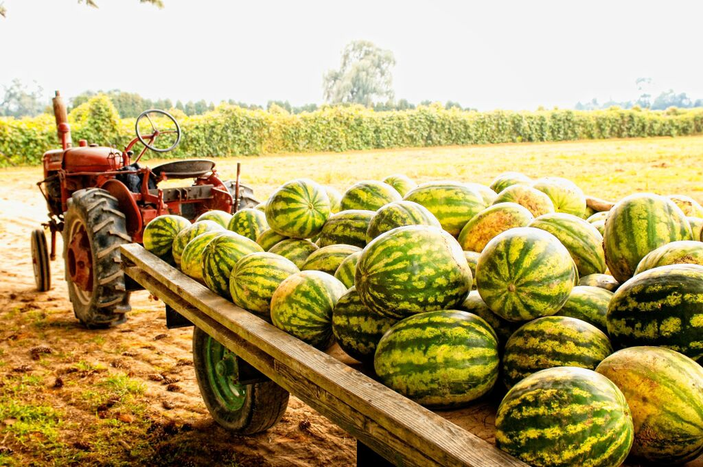 Farm Market watermelon