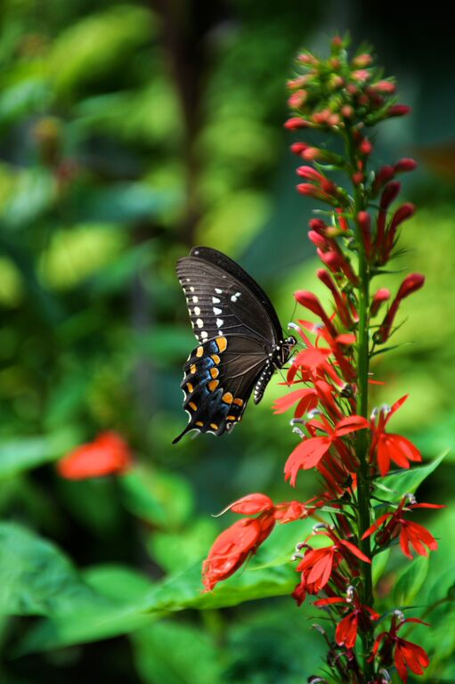 Nature butterfly
