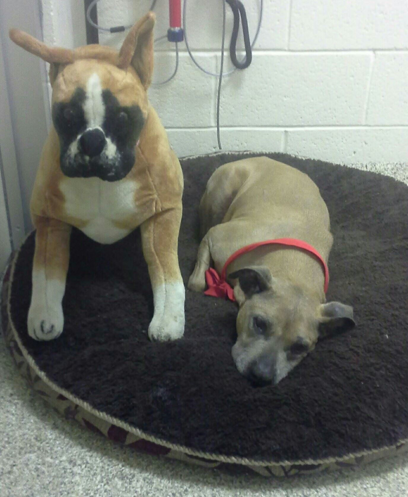 Diamond and her buddy wait patiently for the staff to have time to fuss over them!