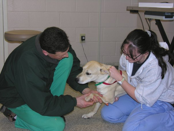 Vet checking dog while its held by an assistant