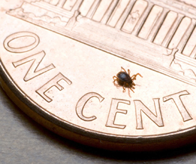 Tick on a penny